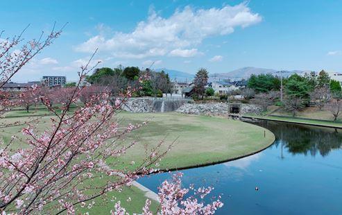 Hoa anh đào (Sakura - さくら) – mùa hoa anh đào đầu tiên